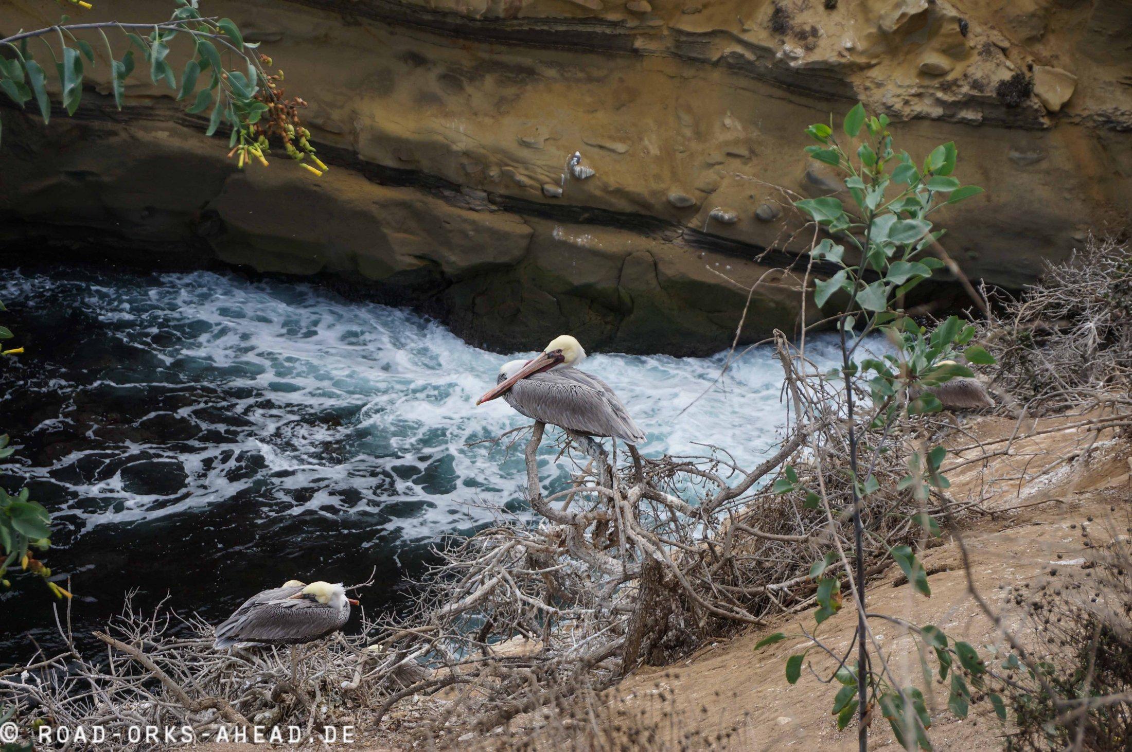 Pelikan Siesta