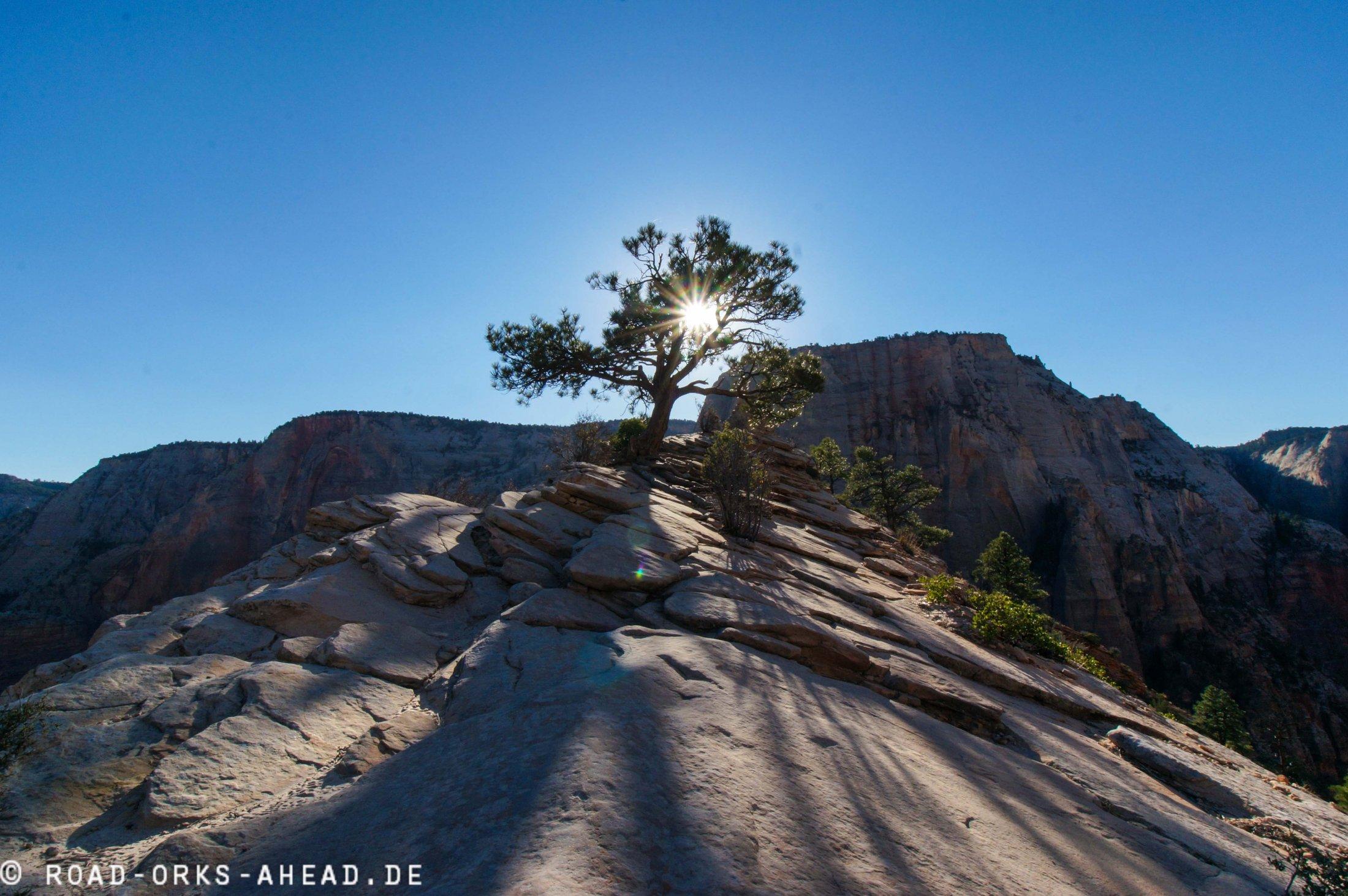 Sonnenaufgang in Zion