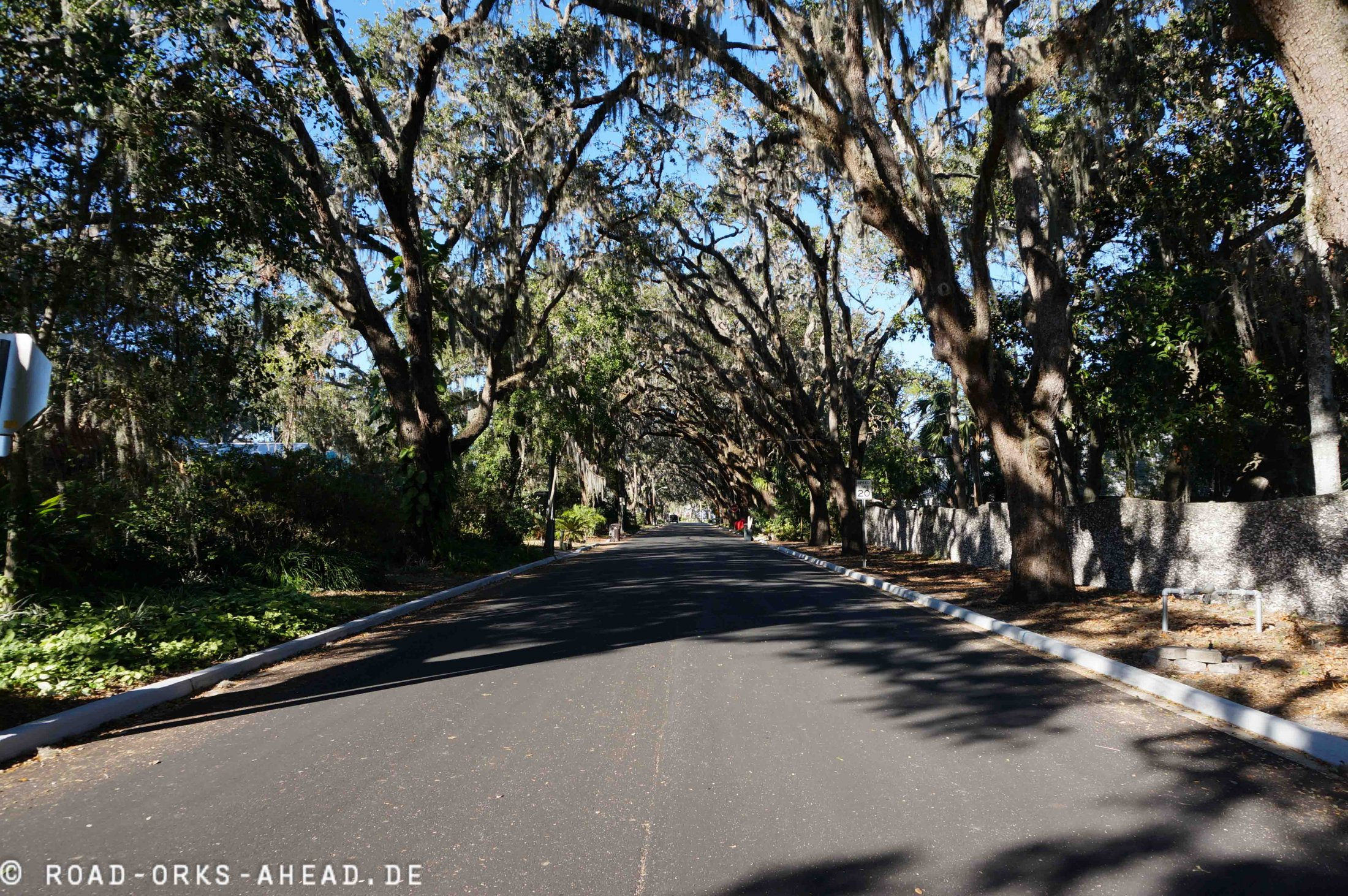 Allee in St. Augustine