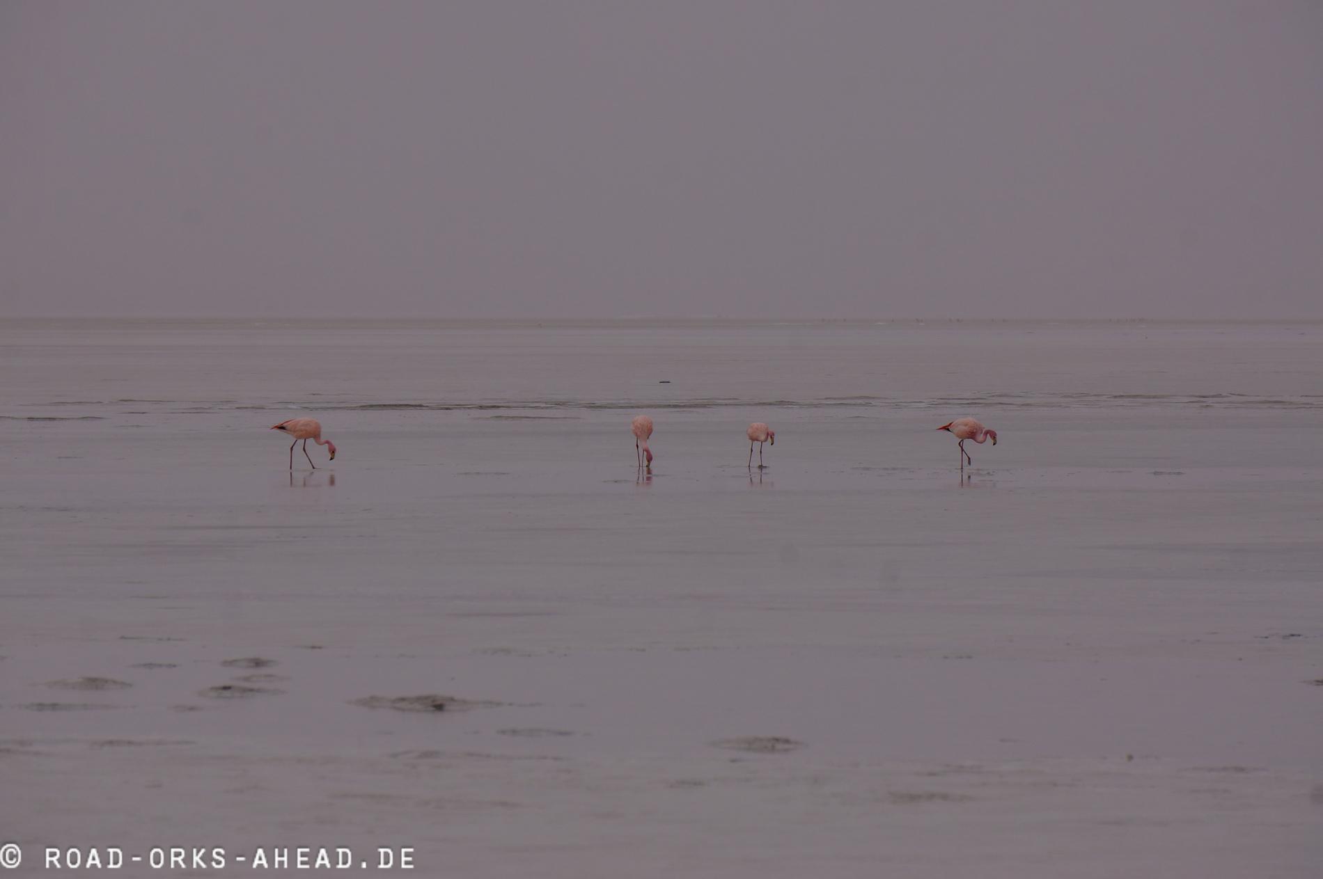 Flamingos an der Laguna Colorado