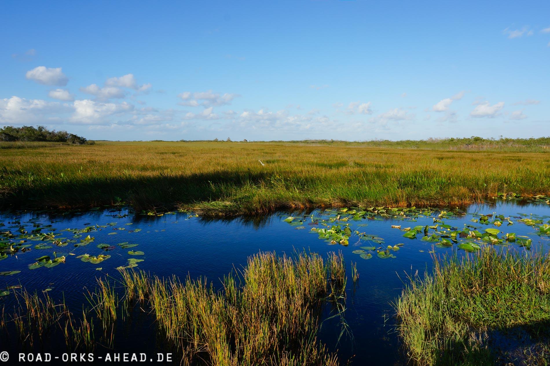 Everglades Wetlands