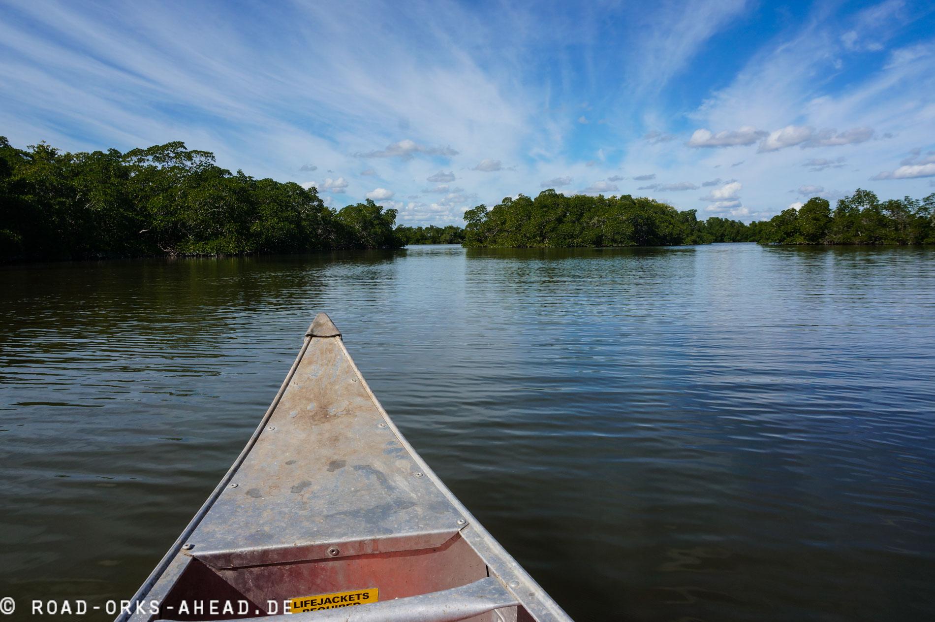 Kanufahrt durch Mangroven