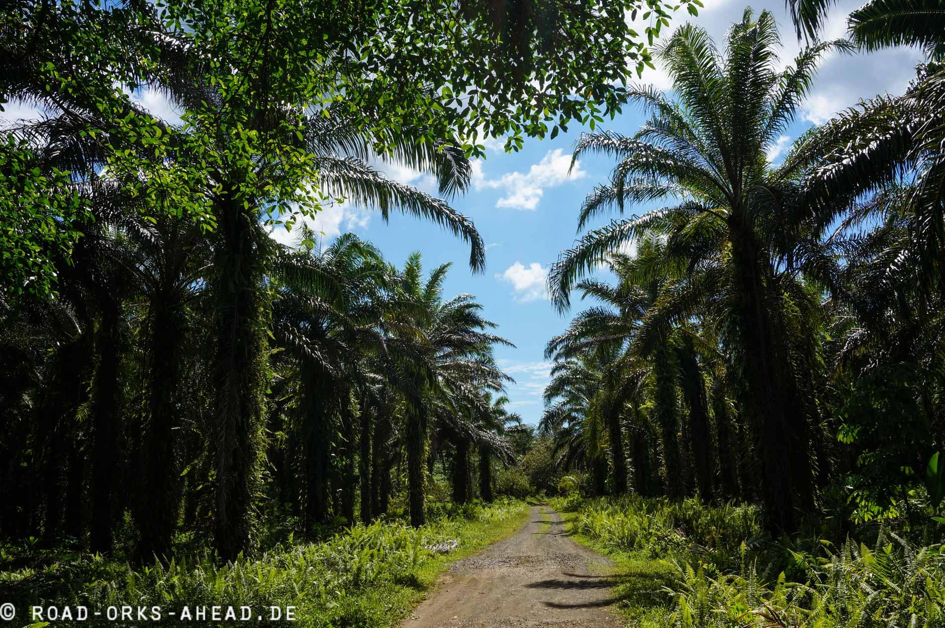 Palmölplantagen gibt es leider überall!