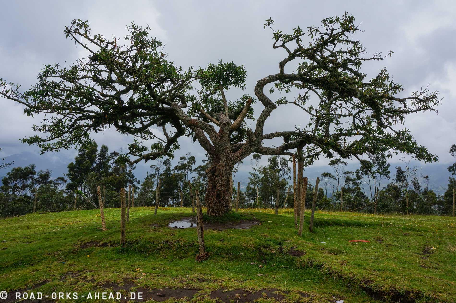 El Lechero - Magischer Baum