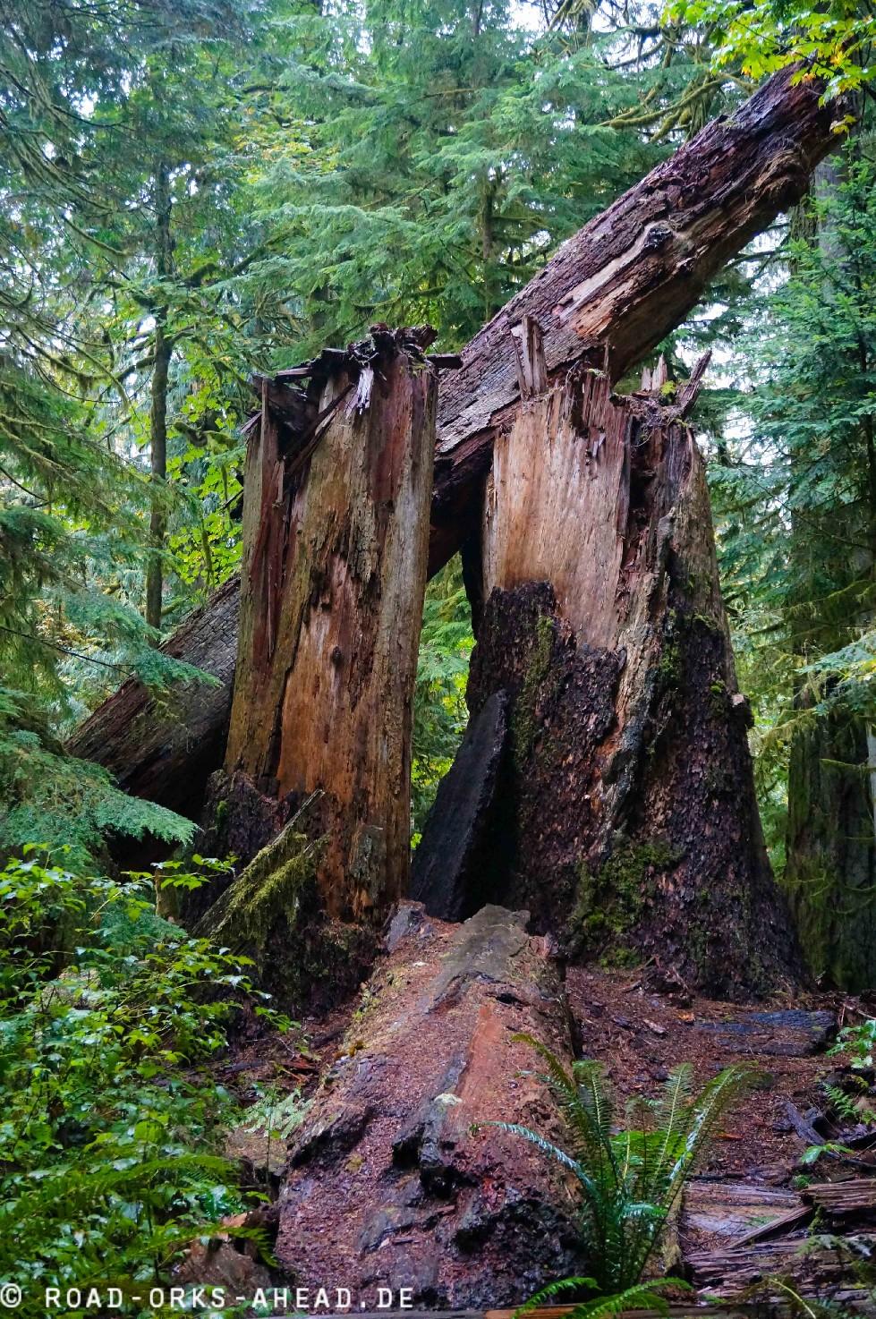 Alte Bäume...