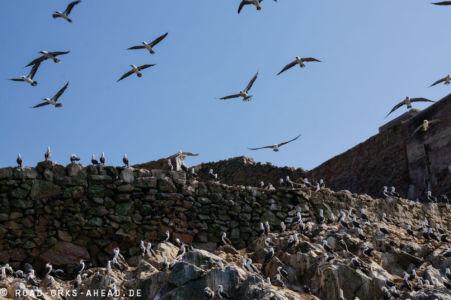 Vogelparadies Ballestas