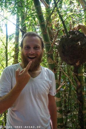 Termiten schmecken wie...Minze