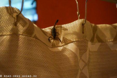 Skorpion im Badezimmer