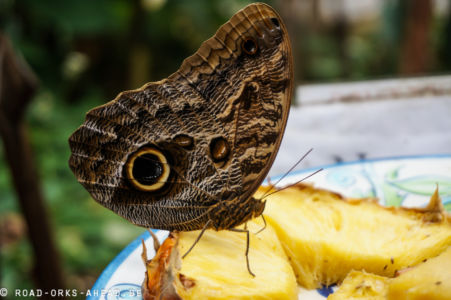 Butterfly Haven, El Valle