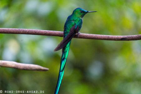 Kolibri hält mal kurz still