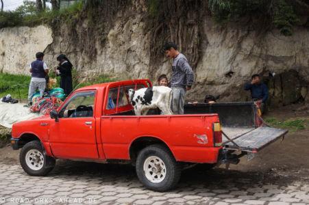 Otovalo Tiermarkt