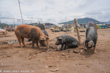 Schwein gefällig?