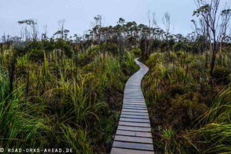 Hartz National Park, Tasmanien