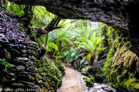 Urwald an der Marakoopa Cave