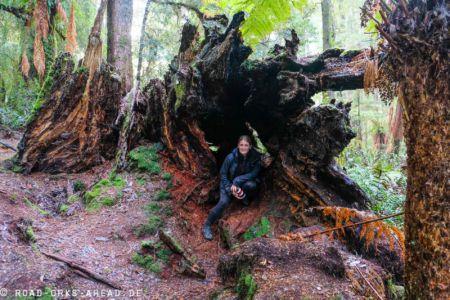 Tarkine Forest Reserve Wanderung