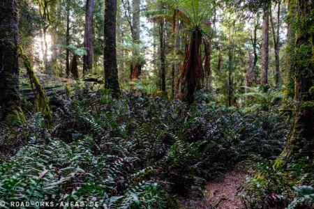 Urwald - Tarkine Forest