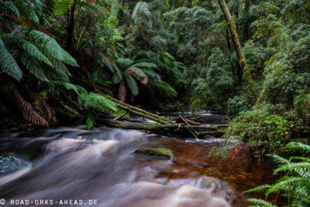 Wanderung zu den Nelson Falls