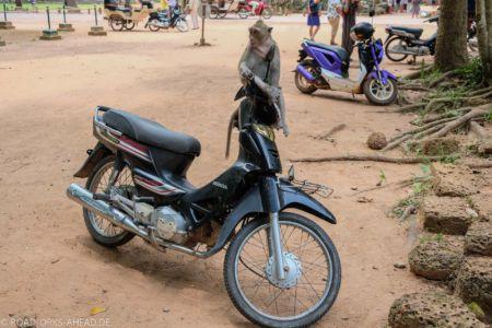 Affe fährt Moped