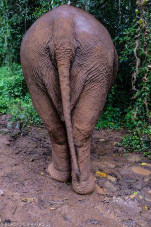 Elefantenarsch