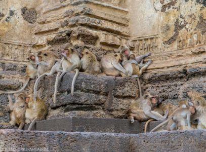 Affenbande ruht aus