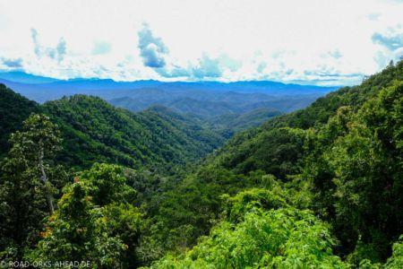 Thailands Dschungel
