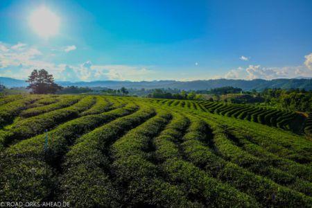 Teefarm Thailand