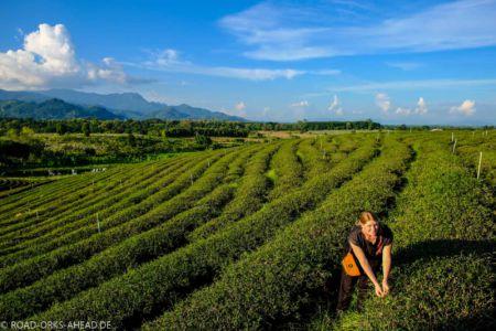 Choui Fong Teefarm