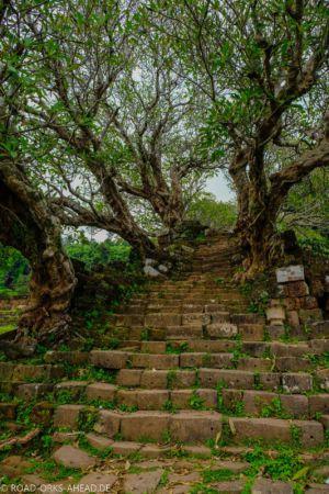 Treppe gesäumt von Magnolien - Vat Phou